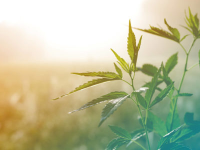 cannabis shipping